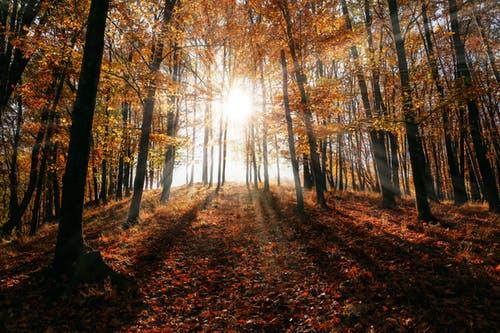 La vie c'est le chemin…leçons d'une promenade.